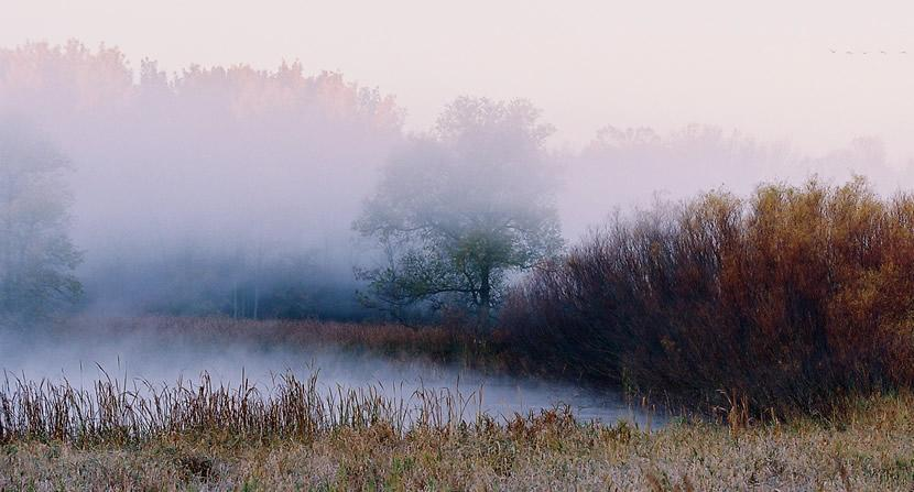 photo of foggy morning amidst trees and a pond