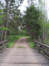 view from wooden bridge onto wooded path