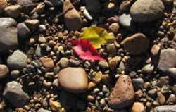 red leaf amidst stones on the riverbank